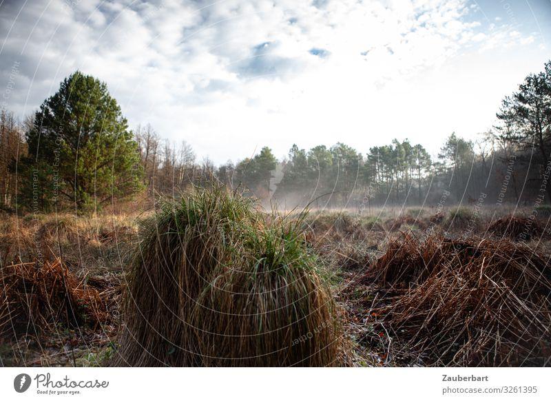 Feuchtwiese im Briesetal Ausflug wandern Natur Landschaft Nebel Baum Gras Sträucher Wiese beobachten Blick natürlich braun grün Schüchternheit Stimmung Umwelt