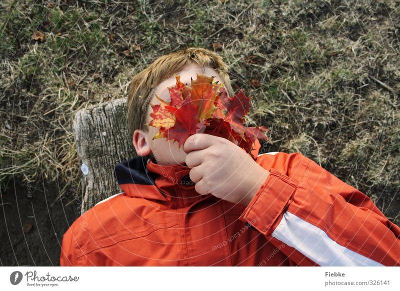 Herbst Mensch Kind Natur Jugendliche Erholung Hand rot Blatt Junge Spielen Freiheit liegen maskulin Kindheit Orange