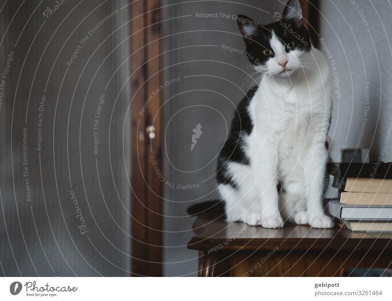 Lemmy- Bruder von Lizzy :) Tier Haustier Katze 1 beobachten frech Fröhlichkeit kuschlig niedlich Erwartung Neugier Hauskatze Tierjunges Tierliebe Fell schön