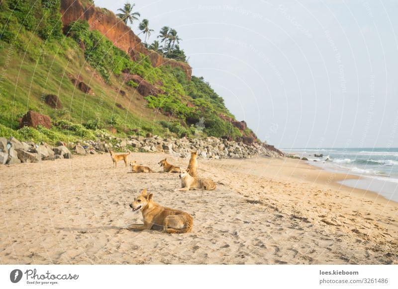 Tropical dog family Erholung Ferien & Urlaub & Reisen Sommer Sommerurlaub Sonnenbad Strand Meer Natur Sand Grünpflanze Wildpflanze Urwald Wellen Küste Tier Hund