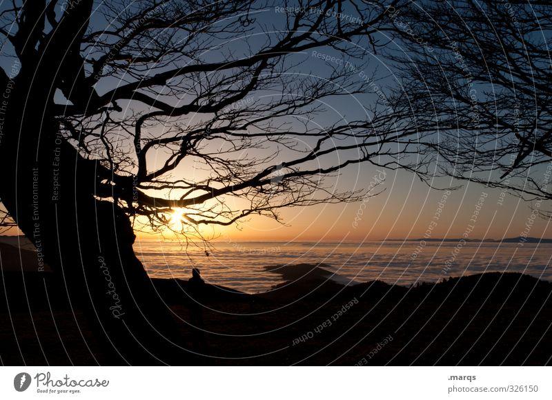 True Romance Ausflug Ferne Freiheit Natur Landschaft Himmel Horizont Sonne Sonnenaufgang Sonnenuntergang Schönes Wetter Baum Ast ästhetisch Kitsch schön