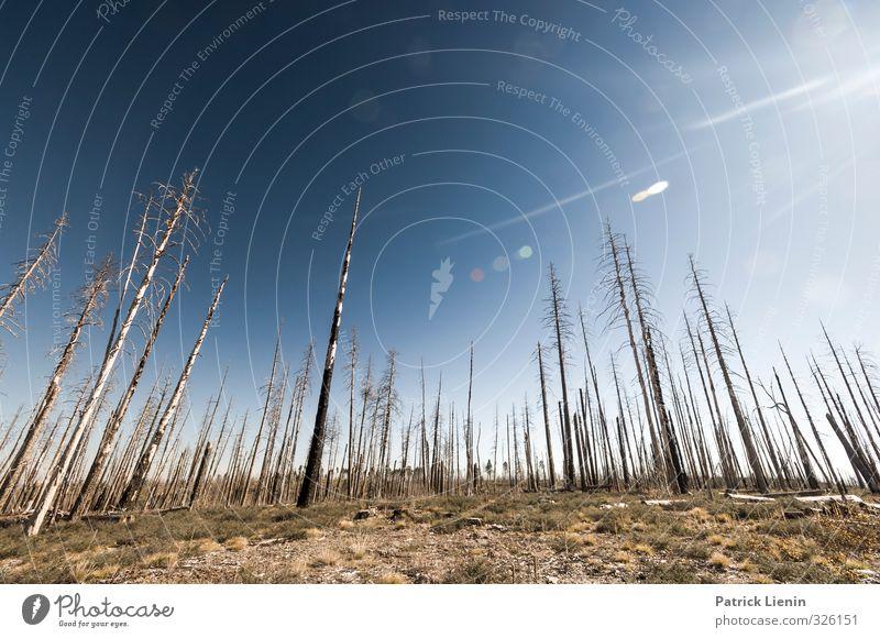 Dead World Himmel Natur Pflanze Sommer Sonne Baum Einsamkeit Landschaft Wald Umwelt trist Klima Schönes Wetter Urelemente Feuer Abenteuer