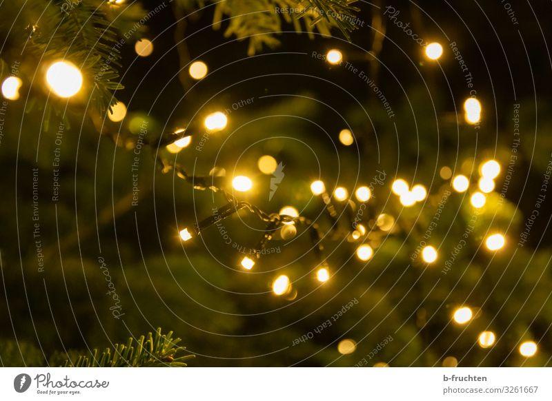 Weihnachtszeit Lifestyle Stil Sinnesorgane Nachtleben Entertainment Feste & Feiern Weihnachten & Advent Silvester u. Neujahr Baum leuchten positiv Sympathie