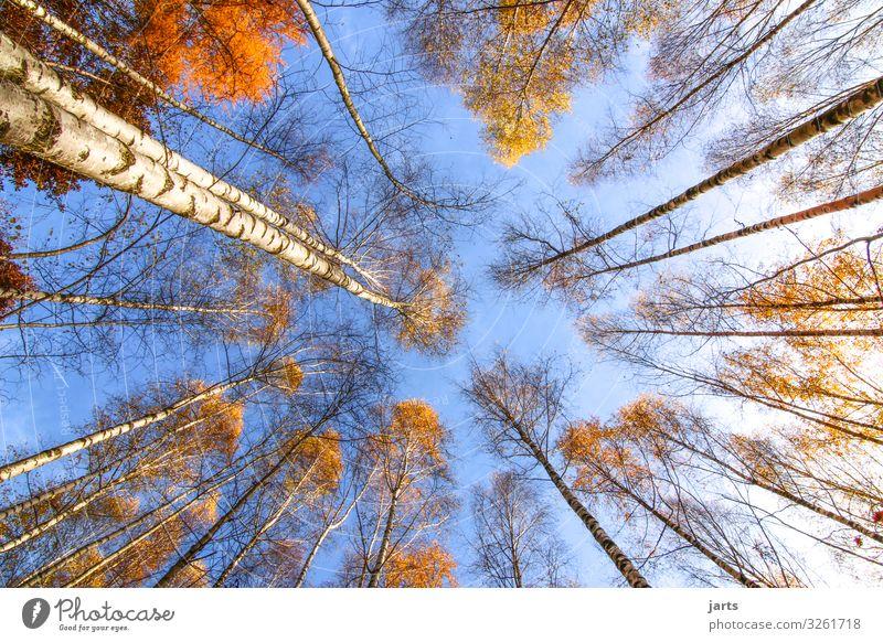 himmelsblick Himmel Natur Pflanze blau Landschaft Baum Blatt ruhig Wald Herbst gelb natürlich außergewöhnlich hell frisch gold
