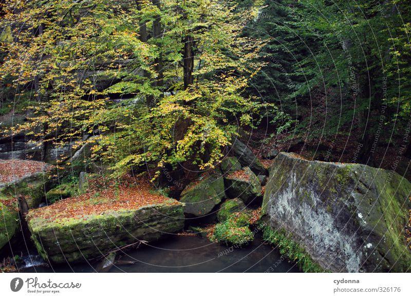 Felsig Natur Ferien & Urlaub & Reisen Wasser Baum Einsamkeit Landschaft ruhig Wald Umwelt Herbst Felsen Idylle Tourismus wandern Ausflug Wandel & Veränderung