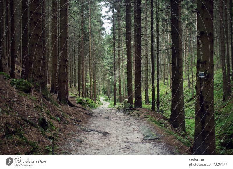Tief im Wald Natur Ferien & Urlaub & Reisen Baum Erholung Einsamkeit Landschaft ruhig Ferne dunkel Umwelt Bewegung Wege & Pfade Idylle wandern Ausflug