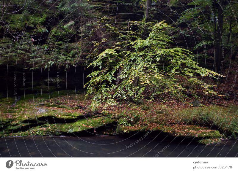 Nah am Wasser Natur schön Baum Einsamkeit Erholung Landschaft ruhig Blatt dunkel Wald Umwelt Leben Herbst Felsen Regen