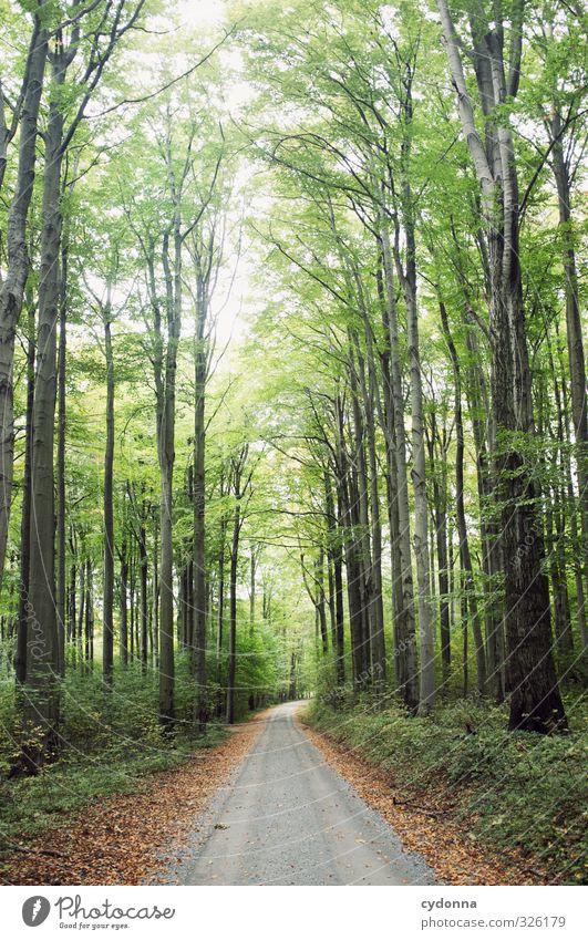 Waldweg Natur Ferien & Urlaub & Reisen Sommer Baum Erholung Einsamkeit Landschaft ruhig Ferne Umwelt Leben Wege & Pfade Freiheit Idylle Wachstum