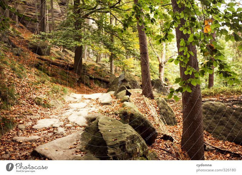 Steiniger Weg Natur Ferien & Urlaub & Reisen Baum Landschaft ruhig Blatt Wald Umwelt Berge u. Gebirge Herbst Wege & Pfade Freiheit Felsen Idylle wandern Ausflug