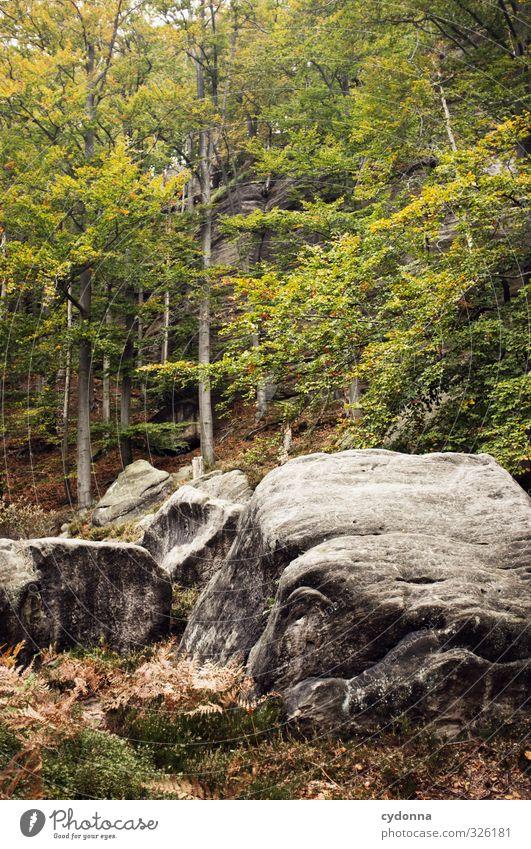 Felsig Natur Ferien & Urlaub & Reisen Baum Erholung Einsamkeit Landschaft ruhig Wald Umwelt Berge u. Gebirge Herbst Felsen Idylle Tourismus wandern Abenteuer