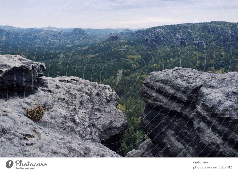 Sächsische Schweiz Ferien & Urlaub & Reisen Tourismus Ausflug Abenteuer Ferne Freiheit Berge u. Gebirge wandern Umwelt Natur Landschaft Sommer Wald Felsen