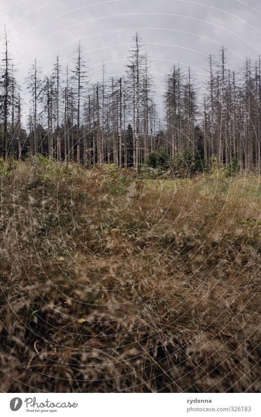 Toter Wald Umwelt Natur Landschaft Wolken schlechtes Wetter Baum Gras ästhetisch Einsamkeit Ende Endzeitstimmung bedrohlich Misserfolg nachhaltig stagnierend