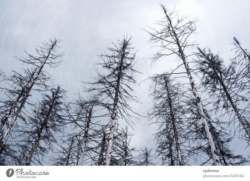 Abgelebt Natur Baum Einsamkeit Landschaft ruhig Wolken Wald kalt Umwelt Traurigkeit Tod Zeit Gesundheit ästhetisch bedrohlich Vergänglichkeit