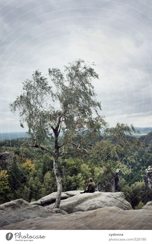 Naturverbunden Mensch Ferien & Urlaub & Reisen Jugendliche Baum Erholung Einsamkeit Landschaft ruhig Wolken Junger Mann Ferne Wald Umwelt Berge u. Gebirge Leben