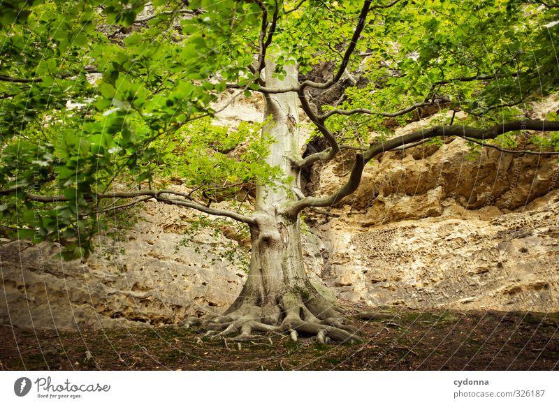Lebensbaum Natur schön Sommer Baum Erholung ruhig Wald Umwelt Berge u. Gebirge Freiheit Zeit Gesundheit Felsen Kraft Idylle