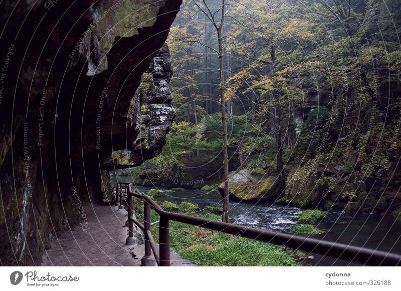 Klamm Natur Ferien & Urlaub & Reisen Wasser Baum Einsamkeit Landschaft ruhig Wald Umwelt Herbst Wege & Pfade Felsen Regen Idylle wandern Ausflug