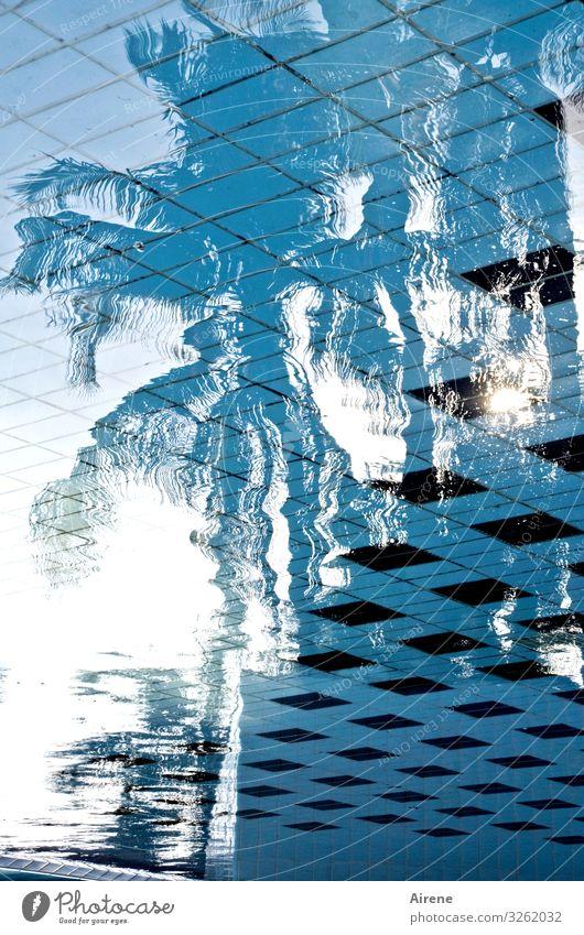 Sehnsuchtsort Palme Schwimmen & Baden nass Schwimmbad Ferien & Urlaub & Reisen Urlaubsstimmung Hotelpool exotisch Erholung Erfrischung Spiegelbild Palmenstrand