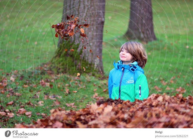 freundlicher Junge steht auf einer Wiese und schaut nach schwebenden Herbstblättern Mensch maskulin Kind Kindheit 1 3-8 Jahre Umwelt Natur Pflanze Baum Gras