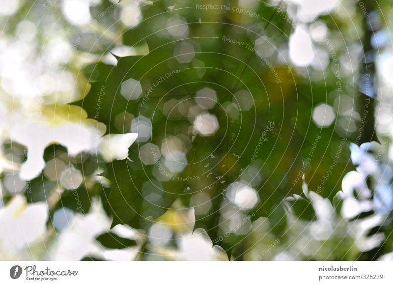 Nature Umwelt Landschaft Pflanze Sommer Schönes Wetter Blatt Grünpflanze Park nachhaltig grün Fröhlichkeit Freiheit Frieden ruhig Farbfoto abstrakt Tag Licht