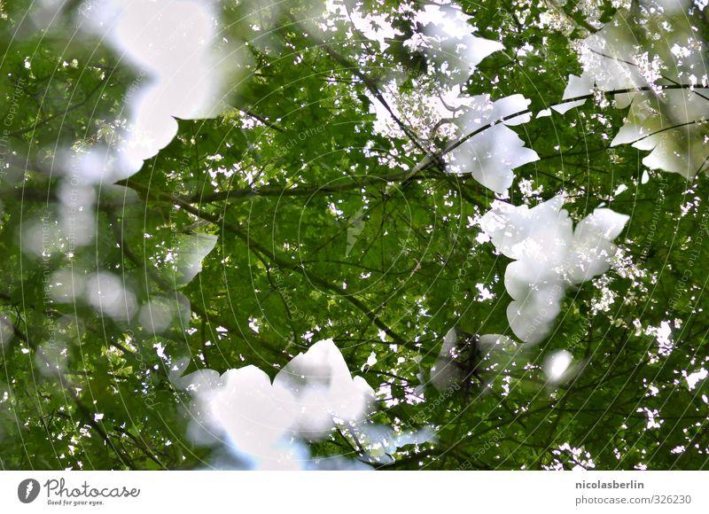 Pflanze | Sommerblatt Natur schön grün Baum Blatt Wald Park groß Schönes Wetter ästhetisch weich nachhaltig Doppelbelichtung Grünpflanze