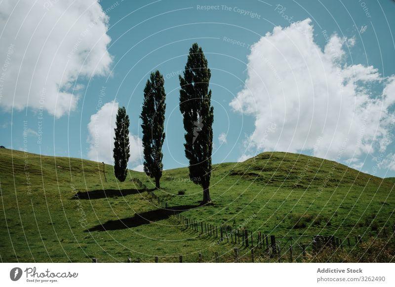 Bäume auf grünen Hügeln in Neuseeland Baum Wiese Tal Cloud Himmel blau Landschaft Lombardei-Pappel Windstille ruhig Zaun hölzern tiefstehend Korral Weide Sommer