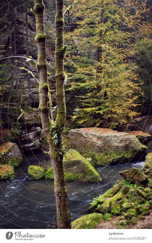 Wildnis Ferien & Urlaub & Reisen Ausflug Abenteuer wandern Umwelt Natur Landschaft Herbst Baum Wald Felsen Bach einzigartig erleben Freiheit geheimnisvoll
