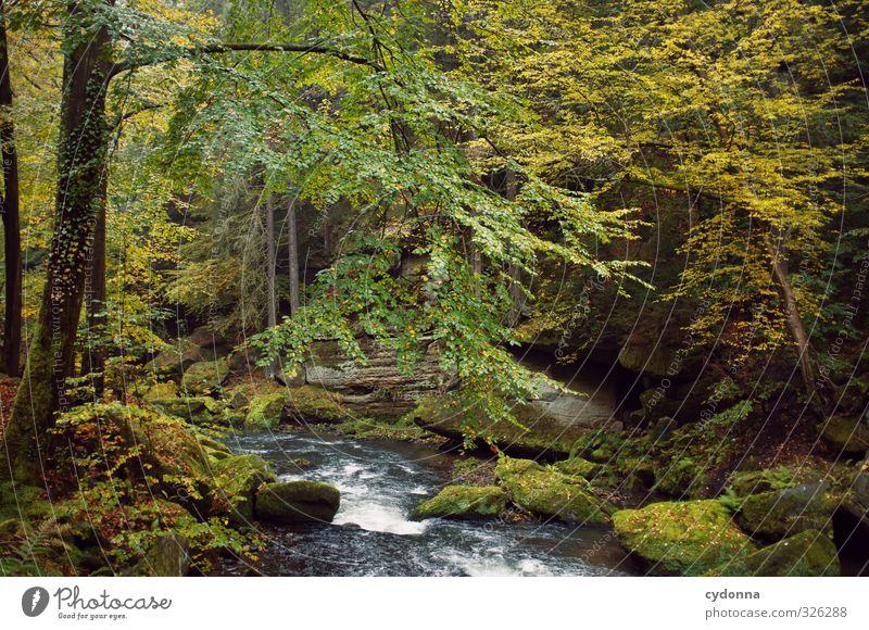 Stromabwärts Ferien & Urlaub & Reisen Tourismus Ausflug Abenteuer wandern Umwelt Natur Landschaft Wasser Herbst Baum Moos Wald Felsen Bach Fluss Bewegung