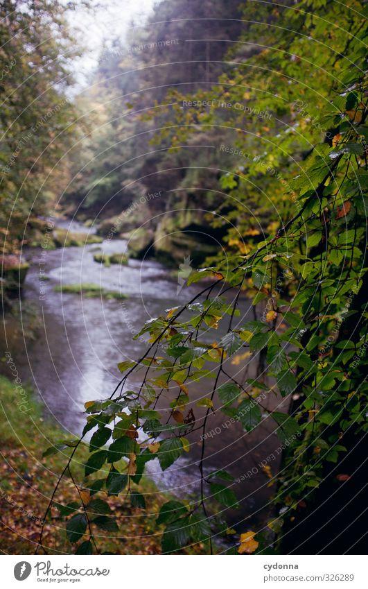 Bachlauf Natur Ferien & Urlaub & Reisen Wasser Baum Einsamkeit Landschaft ruhig Ferne Wald Umwelt Herbst Wege & Pfade Zeit Felsen Regen Idylle