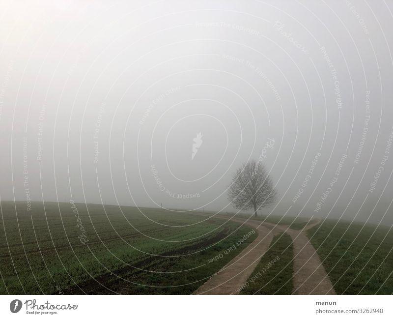 Landschaft im Novembernebel mit einsamem Baum Nebel trist einsam Herbst kalt Natur grau feucht Umwelt Einsamkeit schlechtes Wetter Gedeckte Farben