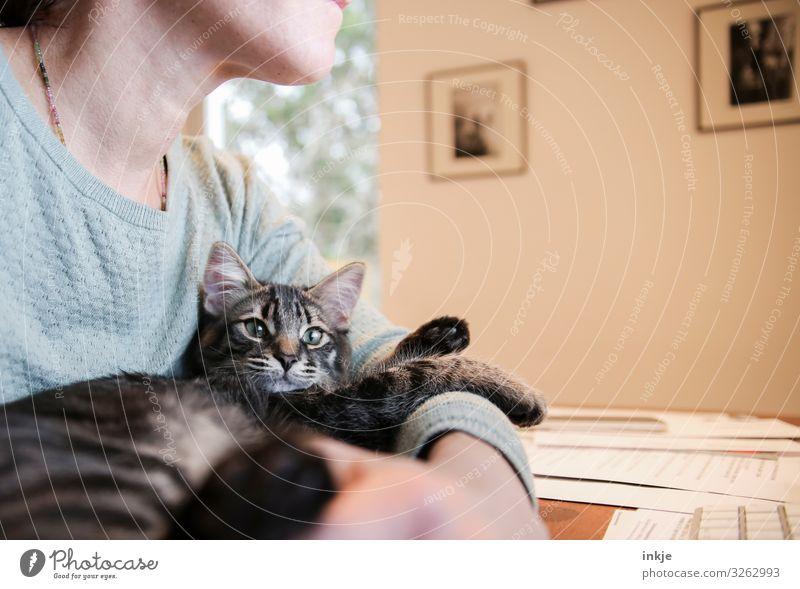 Homeoffice Lifestyle Freizeit & Hobby Häusliches Leben Schreibtisch Bildschirm Frau Erwachsene 1 Mensch Haustier Katze Tiergesicht Tierjunges