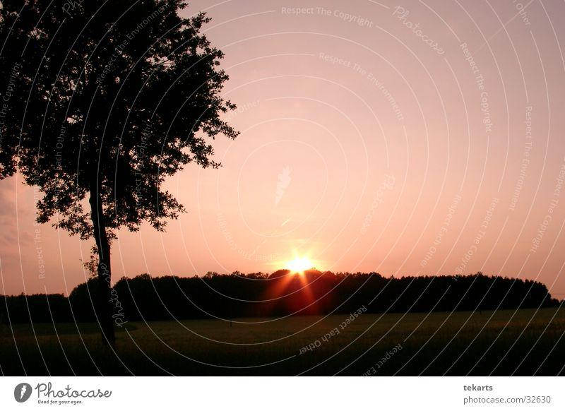 Sonnenuntergang Baum Feld rosa