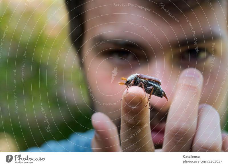 Maikäfer sitzt auf der Fingerspitze des jungen Mannes Portrait Person Junger Mann Hände Fauna Natur Tier Garten Insekt Käfer Frühling krabbeln schauen Tag