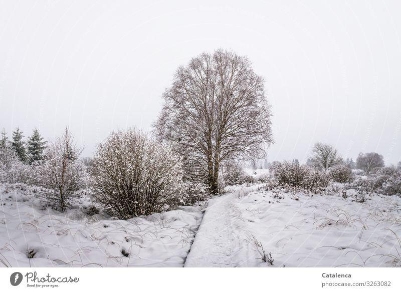Etwas Schnee Natur Landschaft Pflanze Himmel Winter schlechtes Wetter Eis Frost Baum Sträucher Wiese Feld Hohes Venn Moor Wege & Pfade kalt braun grau weiß
