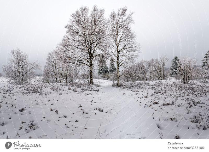 Es hat geschneit Himmel Natur Pflanze grün weiß Landschaft Baum ruhig Winter kalt natürlich Wege & Pfade Schnee braun grau Stimmung
