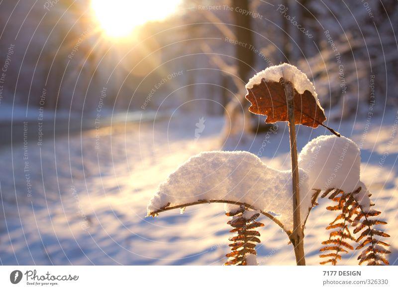 Schnee im Sommer Natur Ferien & Urlaub & Reisen Pflanze Sonne Landschaft Blatt Winter kalt Umwelt Straße Frühling Blüte Schneefall Eis