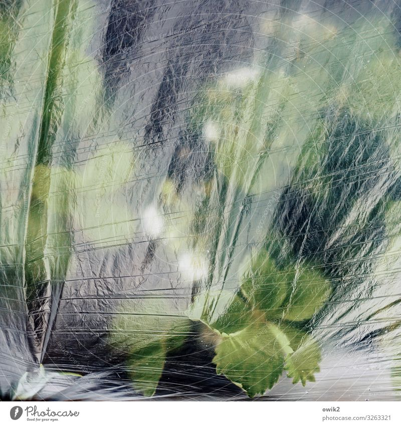 Folienbeet Pflanze schlechtes Wetter Eis Frost Nutzpflanze Erdbeeren Blatt Garten Abdeckung Frostschutz Wetterschutz Wärme Cellophan Verpackung