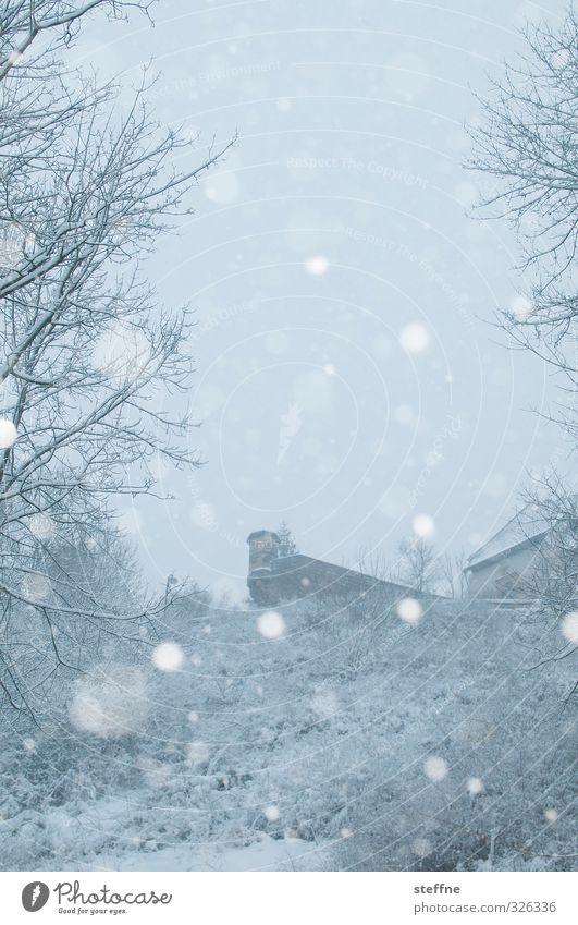 Weiße Weihnacht Winter kalt Wartburg Wald Schneefall Schneeflocke Farbfoto