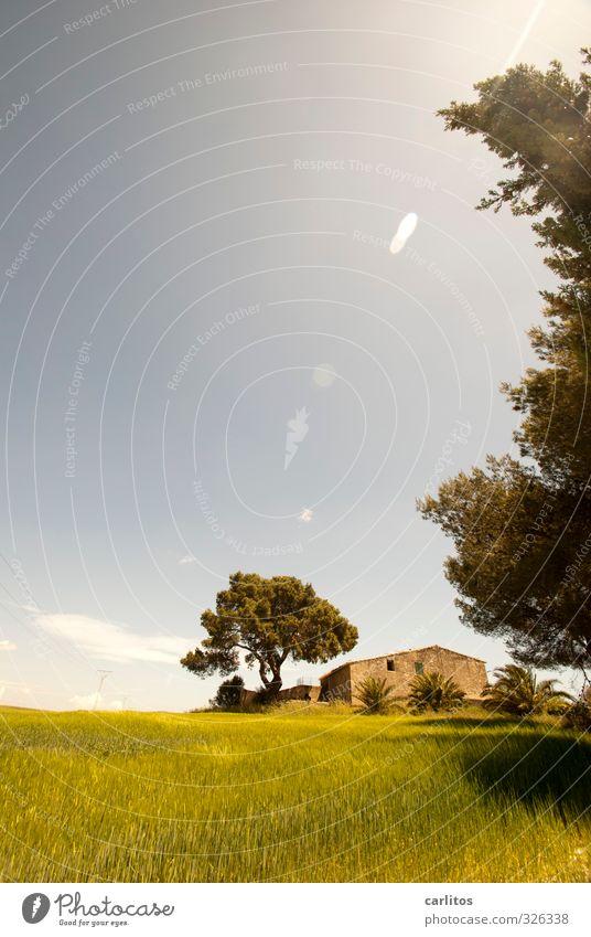 Altersruhesitz Pflanze Wolkenloser Himmel Sonnenlicht Sommer Schönes Wetter Baum Gras Haus Ruine Bauwerk ästhetisch blau gelb grün Mallorca mediterran