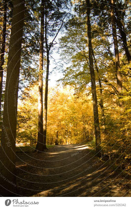 herbstspaziergang Umwelt Natur Herbst Schönes Wetter Baum Wald Erholung leuchten wandern Freundlichkeit natürlich Gelassenheit geduldig ruhig Zufriedenheit