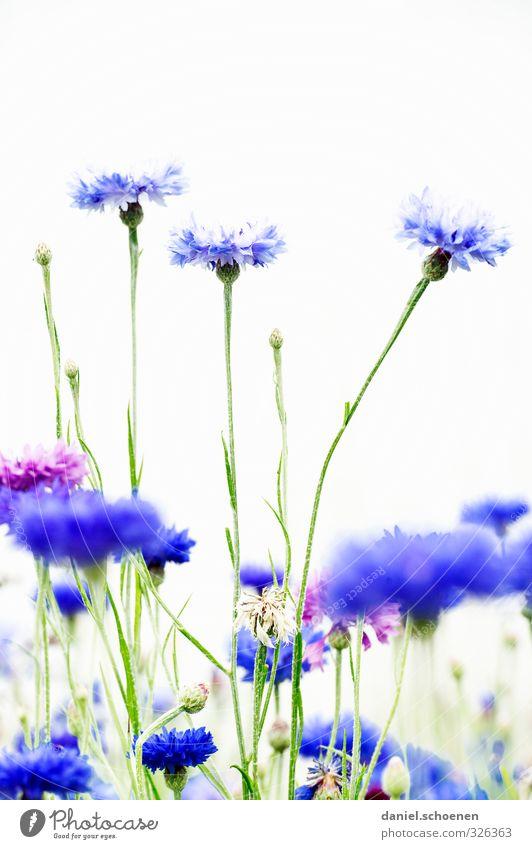 Blümschen Natur schön grün weiß Pflanze Blume Blüte hell