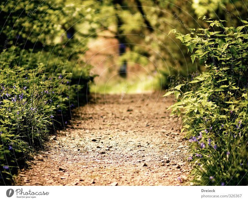 step into ... wandern Umwelt Natur Sommer Pflanze Sträucher Blatt Grünpflanze Wildpflanze Park Wald Wege & Pfade grün ruhig Erholung Farbfoto Außenaufnahme Tag
