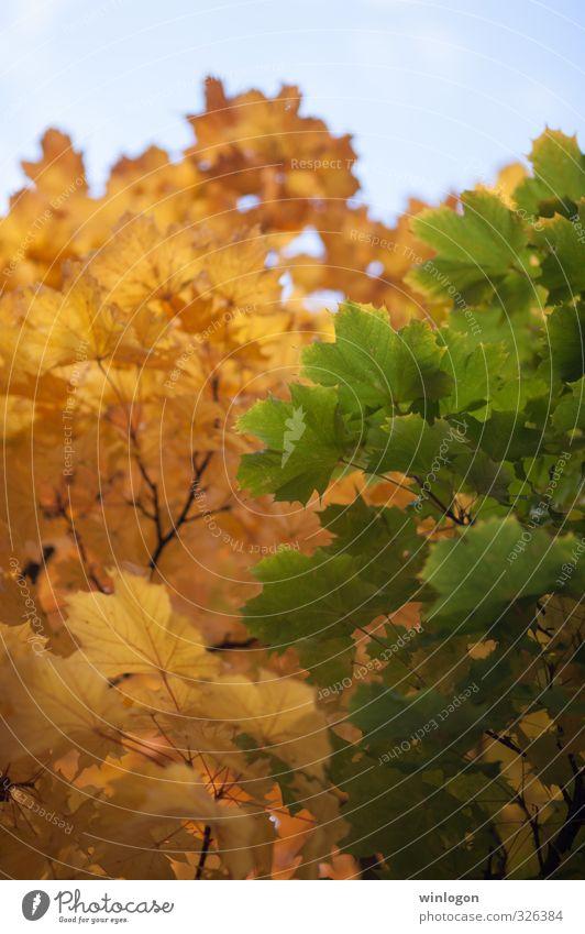 Zwei Farben Himmel Pflanze blau grün schön Baum Landschaft Blatt gelb Leben Herbst Gefühle Glück Kunst 2 Park