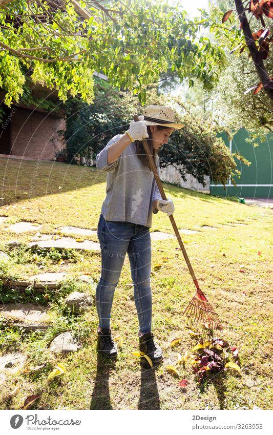 Junge Frau, die im Hinterhof arbeitet und das Herbstlaub der Eiche mit grünem Rasen sammelt Werkzeug Gerät heimwärts außerhalb Arbeit 1 Saison Aktivität