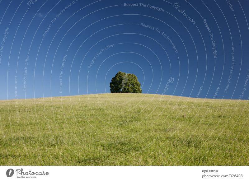 Natursymmetrisch Sommer Baum Erholung Landschaft ruhig Umwelt Ferne Wiese Leben Freiheit Gesundheit Horizont träumen Idylle Zufriedenheit