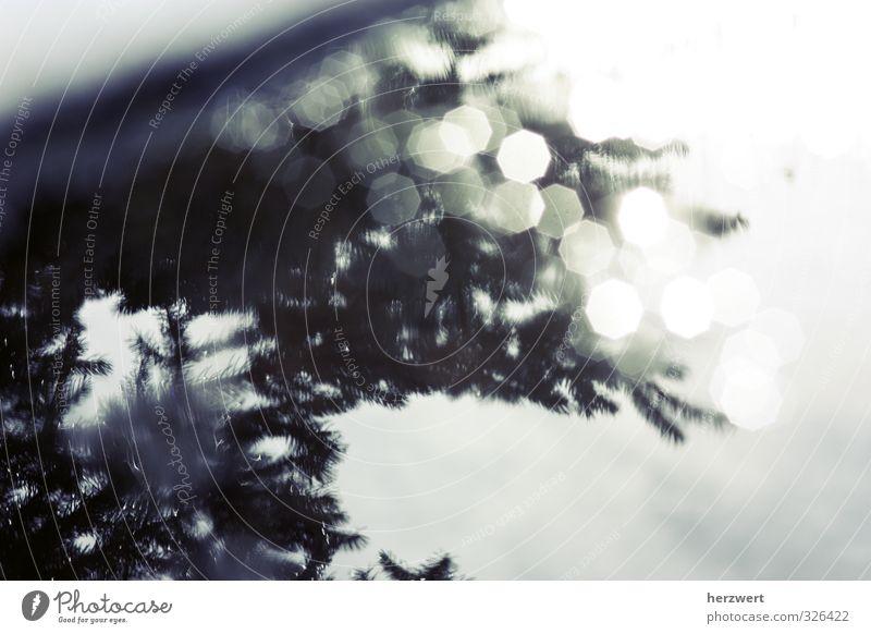 Spieglein, Spieglein... Umwelt Wasser Stimmung Spiegelung glitzern Meinung Schwarzweißfoto Außenaufnahme Licht Schatten Reflexion & Spiegelung Lichterscheinung