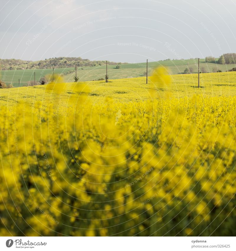 Oh - ein Rapsbild! Landwirtschaft Forstwirtschaft Umwelt Natur Landschaft Himmel Frühling Schönes Wetter Nutzpflanze Wiese Feld Hügel Freiheit Horizont Idylle