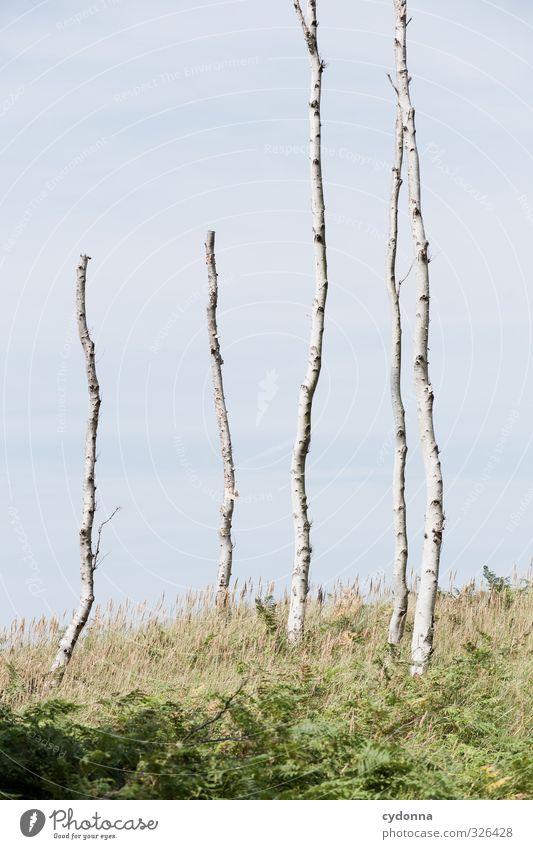 Abbrecher Himmel Natur Sommer Baum Einsamkeit Landschaft ruhig Tod Gras Linie Wind Wachstum Schönes Wetter ästhetisch Vergänglichkeit Ende