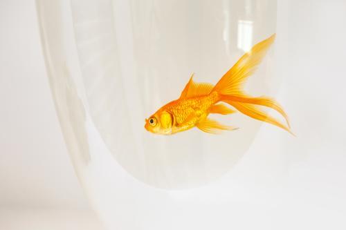 Natur Farbe schön weiß Tier Bewegung Business Freiheit fliegen Freundschaft springen frei gold Aussicht Fröhlichkeit neu
