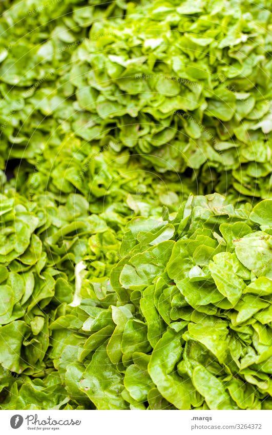 Salatblätter Lebensmittel Salatbeilage Salatblatt Ernährung Bioprodukte Vegetarische Ernährung Wochenmarkt frisch viele Gesundheit Farbfoto Außenaufnahme