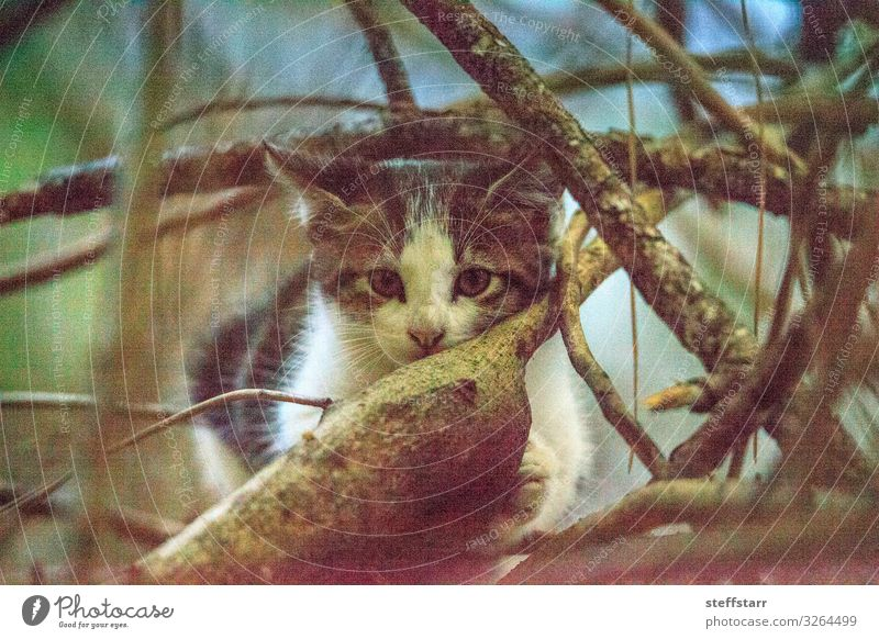 Süßes verirrtes Kätzchen klettert auf einen Baum Klettern Bergsteigen Baby Haustier Wildtier Katze 1 Tier Tierjunges niedlich wild braun grau schwarz weiß ruhen